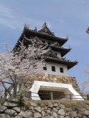 天守閣と桜 1