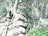 洲本城で最も古い石垣