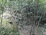洲本城東部第一線の石垣